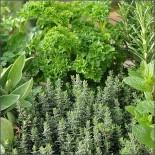 Пряная зелень