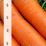 Морковь на ленте