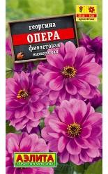 Георгина Опера Фиолетовая 0.1г #Аэлита