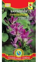 (2021) Баухиния пурпурная 2шт #Плазма