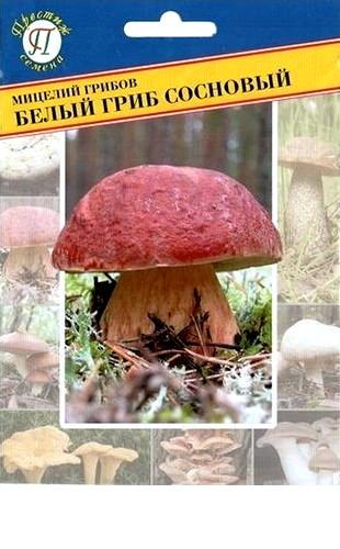 Мицелий грибов Белый гриб сосновый 50мл #Престиж